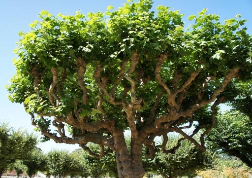 SF-tree2
